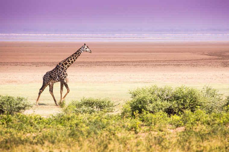 Manyara, Tanzania tour operators