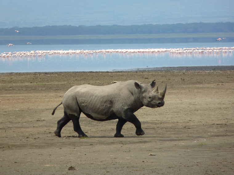 Ngorongoro Crater, Black Rhino, Tanzania tours