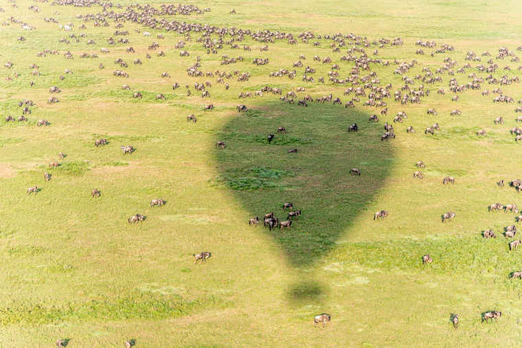 Great Migration Tanzania, Tour Comparison Tanzania