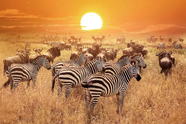 Serengeti, Tour comparison Tanzania