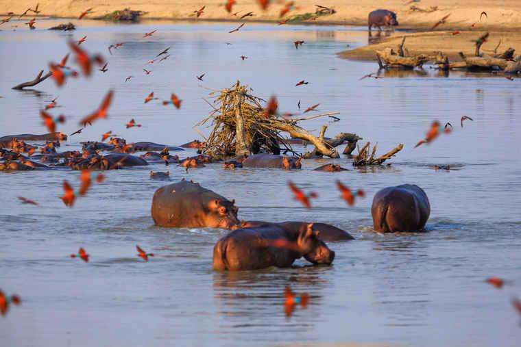 South Luangwa National Park Zambia, Zambia travel