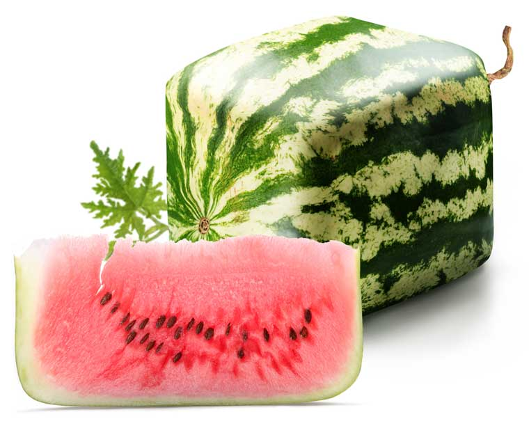 Japanese Square watermelon, Japan tourism, what to do in Japan
